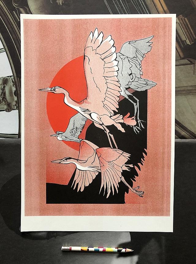 Red herons